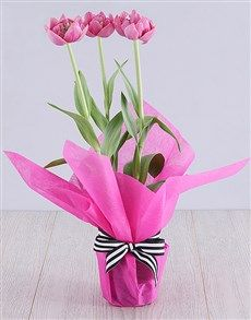 plants: Purple Tulip Plant in Cerise Tissue Paper! Pink Happy Birthday, Happy Birthday Candles, Purple Tulips, Tulips Flowers, Heart Balloons, Helium Balloons, Planting Tulips, Unicorn Balloon, Paper Plants