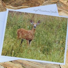 Deer Fawn Photo Note Card. Nature Photography. by myMountainStudio
