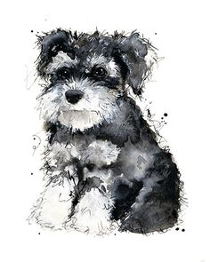 Miniature Schnauzer. Makes me think of our old dog! ♡
