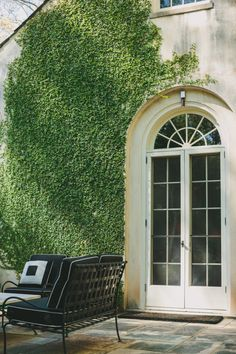 Fig ivy on courtyard wall by Howard Design Studio