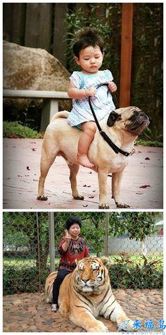 niña montada en perro