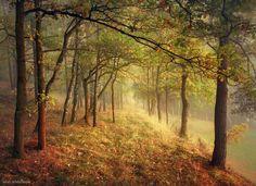 "<a href=""http://instagram.com/kilianschoenberger/"">I N S T A G R A M</a>  Eastern Bavaria, Germany  <a href=""https://www.facebook.com/pages/Landscape-Photography-by-Kilian-Schoenberger/304631876263547"">L A N D S C A P E   P H O T O G R A P H Y facebook</a>"