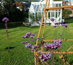Arch, Outdoor Structures, Garden, Plants, Design, Longbow, Garten, Lawn And Garden, Tuin