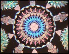 Google Image Result for http://diatoms.lifedesks.org/files/diatoms/images/diatoms.preview.jpg