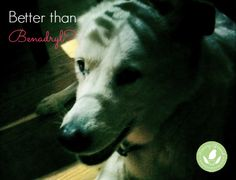 Can Pets Prevent Allergies? - http://www.mommygreenest.com/can-pets-prevent-allergies/