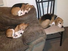 "sleeping beagles! my favorite is the one ""perched"" on the back of the couch"