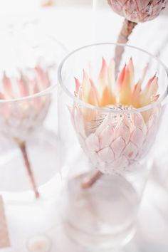 View entire slideshow: 7 Beautiful Blush Proteas on http://www.stylemepretty.com/collection/2532/