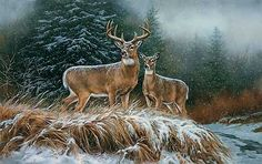 In the Storm-Whitetail Deer Art Print by Rosemary Millette : Wild Wings
