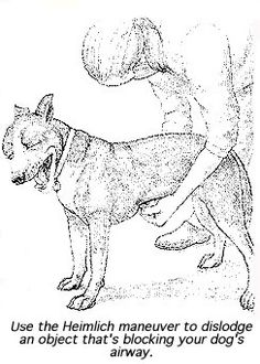 Heimlich Maneuver for Dogs » DogHeirs | Where Dogs Are Family « Keywords: Heimlich maneuver, choking, not breathing, CPR