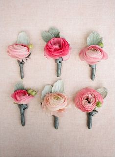 Coral/Pink Ranunculus for the Groom's Boutonniere and the women's corsages. Toss some into my bouquet?