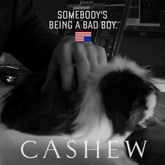 Cashew, House of Cards