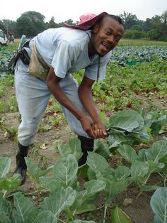 Fun with collard greens at Atlas Farm!