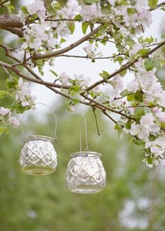 Spring party, hang a lantern in a blossom tree.....