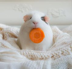 carrot face.