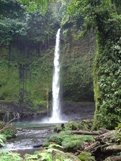 Ecuador photos pictures jungle puyo rainforest waterfalls exotic plants jungle photos Ecuador