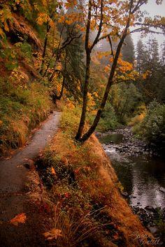 Eagle Creek Trail to Punchbowl Falls, Oregon. Wilderness Campsites.