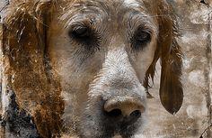 Ihr MünchnerPremium Online Hunde Shop Dog Luxury bietet Ihnen hundefreundliche Lifestyle-Produkte und Luxus-Accessoires für den täglichen Hundebedarf.