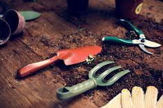 Kiskerti szerszámok és a téliesítés: hogyan készüljünk fel a hidegre? Pumpkin Leaves, Green Pumpkin, Planting Tools, Planting Vegetables, Small Cactus, Cactus Plants, Garden Shop, Garden Pots, Small Garden Tools