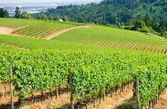 DundeeNear: Portland, OR  Located just 30 miles from Portland, Dundee is the epicenter of Oregon's wine country in the Willamette Valley. Th...