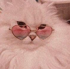 H cats pets cute – Wallpaper Cat Aesthetic, Aesthetic Collage, Aesthetic Vintage, Angel Aesthetic, Aesthetic Clothes, Images Murales, Image Deco, Images Esthétiques, Cat Wallpaper