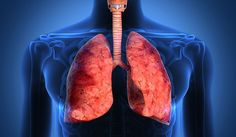Lung Transplant Rejection Reduced by New Filtering Technique Lung Disease News The Doctors Tv Show, Asthma Relief, Respiratory Therapy, Respiratory System, Disease Symptoms, Cystic Fibrosis, Lung Cancer, Kids Health, Herbalism