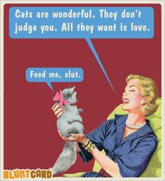 funny ecards blunt cards cats are wonderful they do't judge you they just want l. - funny ecards blunt cards cats are wonderful they do't judge you they just want love feed me bitch - Funny Shit, Haha Funny, Funny Cats, Funny Animals, Hilarious, Fun Funny, Funny Stuff, Daily Funny, Cat Stuff