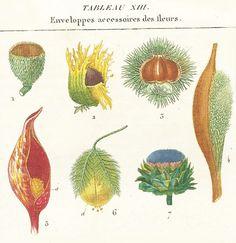 Remarkable 1819 Botanical Print Leaves Genuine by sofrenchvintage