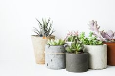 Parce que non, malheureusement, adorer les plantes ne suffit pas à savoir s'en occuper, notre cimetière à ficus en sait quelque chose.