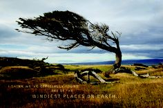 """Everything in coastal Patagonia-like this famous """"Flag Tree""""-has adapted to the region's unforgiving winds. Vs The World, Immersive Experience, Site Design, Patagonia, Cadillac Ats, Coastal, Country Roads, Earth, Graphic Design"""