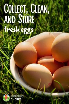 How to Collect, Clean, and Store Fresh Chicken Eggs so They're Safe to Eat: http://morningchores.com/collect-store-clean-eggs/