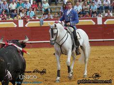"""""""PIRATA"""", el famoso caballo que Pablo Hermoso de Mendoza utiliza para el último tercio, estará apartado de los ruedos por algunos días debido a una lesión.  La nota informativa completa la encontrará siguiendo este vínculo: http://www.pablohermoso.net/noticias/2015/20150906lesionpirata/nota.htm"""