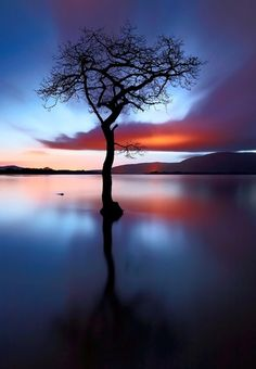 You are never solitary. Notice the tree's friends: the water, the mountains and the beautiful colors of the sky. (: