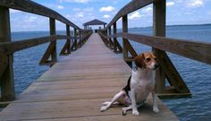 Meet a Lowcountry Dog: Weezie