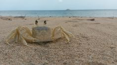 cangrejo-crab11
