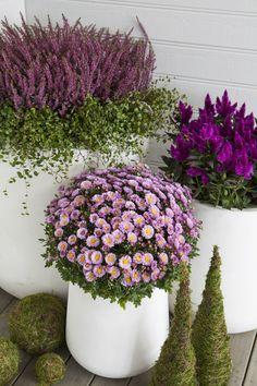 velkomst_til_gjesten_med_hebe_lyng_krysantemum - Balkon Garten 100 Container Flowers, Container Plants, Container Gardening, Balcony Garden, Garden Planters, Outdoor Plants, Outdoor Gardens, Potted Plants, Beautiful Gardens