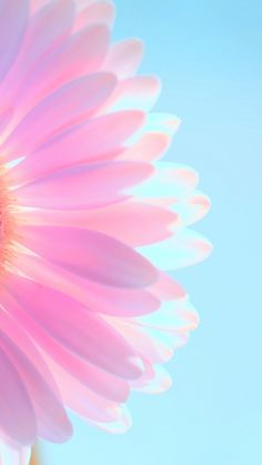 sunlight through flower petals