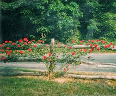 casey/artandcolour: Vintage New England Split Rail Fence