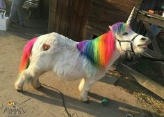 See! Unicorns do exist!