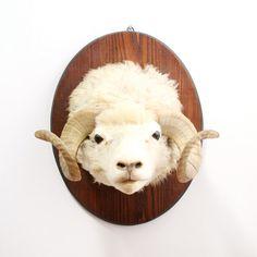 taxidermy sheep