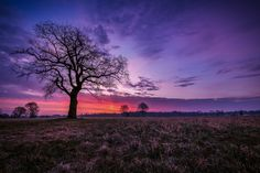 Photograph Magical Tree by Christoph Eberl on 500px