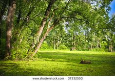 Glade in the summer forest at sunny day by Bodrov Kirill, via ShutterStock