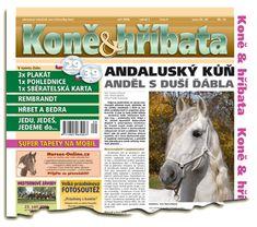 Září 2006 Welsh Pony, Rembrandt, Horses, Animals, Animales, Animaux, Horse, Animal Memes, Animal