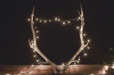 Antler Theme Ranch W