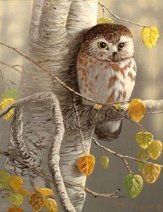 Owl Bird, Bird Art, Pet Birds, Beautiful Owl, Animals Beautiful, Cute Animals, Beautiful Pictures, Owl Photos, Owl Pictures