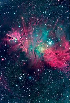 Fucsia-stars-beatiful