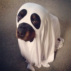 Scary ghost - oh no it's not. It's a rottie.