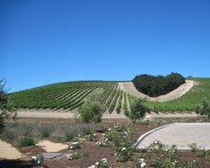 Ninner Estates Vineyards in Paso Robles, CA