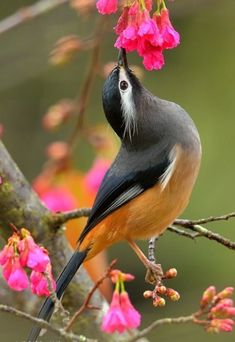 62 Trendy Bird Of Paradise Photography Pictures Most Beautiful Birds, Pretty Birds, Animals Beautiful, Cute Animals, Small Birds, Little Birds, Colorful Birds, Photo Animaliere, Kinds Of Birds