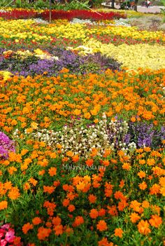 Floria Putrajaya - A flower and garden festival held once a year in the administrative capitol of Malaysia.