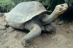 Two Giant turtles can't stand the sight of each other after 115 years of marriage. #truestory #humor #aging #love #wedding #bride